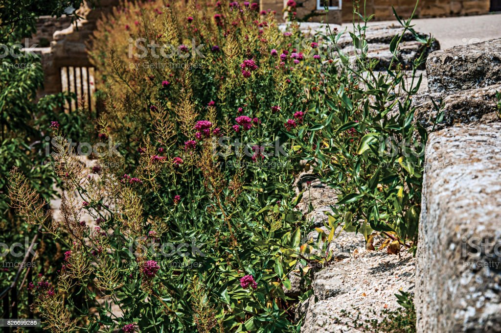 Flowers and shrubs with blue sky on the steps of Pope John XXII's Castle, in Châteauneuf-du-Pape. stock photo