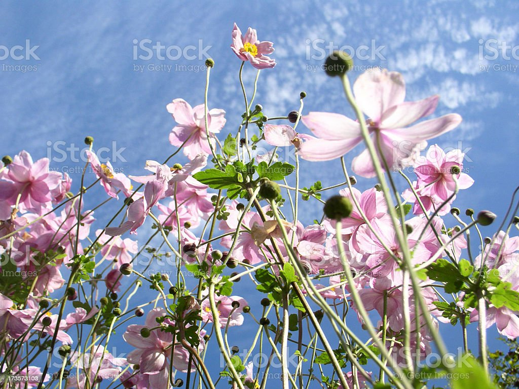 flowers and sky royalty-free stock photo