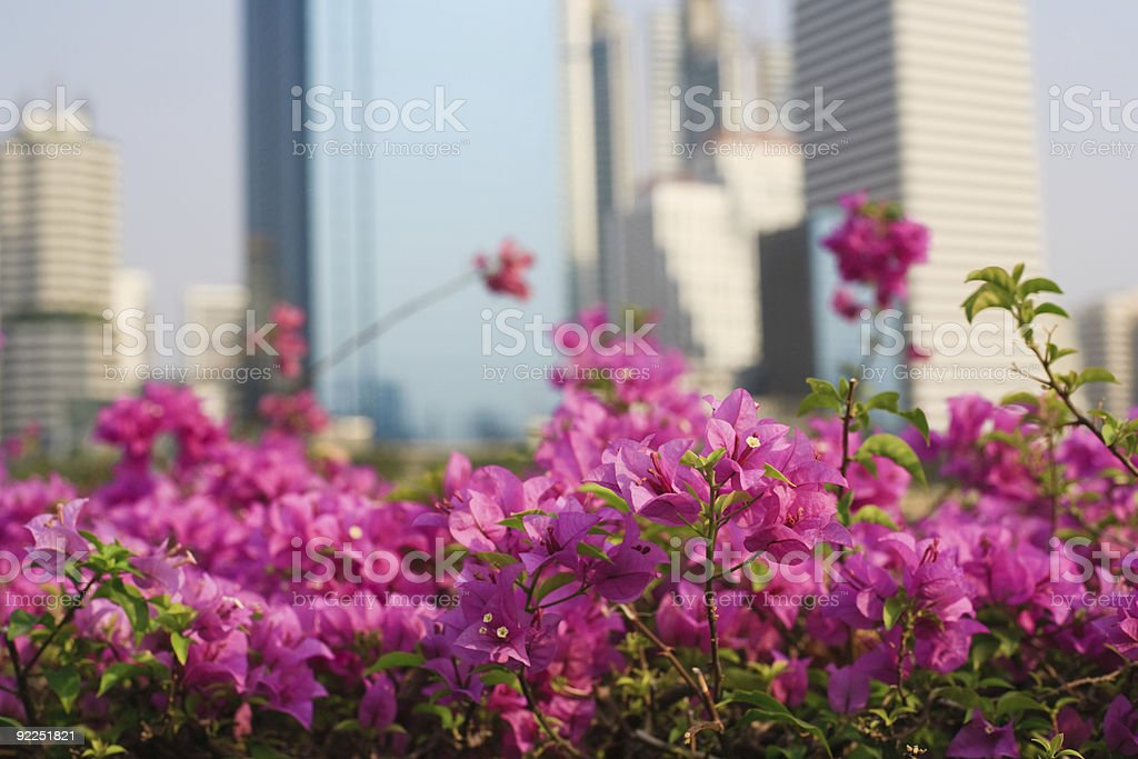 flowers and skyscrapers royalty-free stock photo