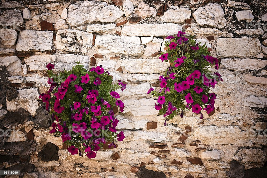 Flowers and stone wall royalty-free stock photo