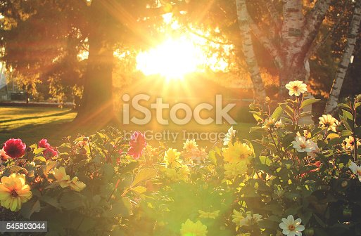 istock Flowers and sunset 545803044