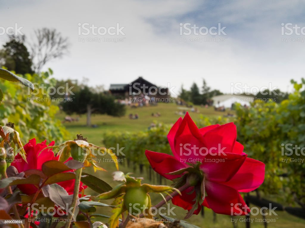 Flowers and Vines stock photo