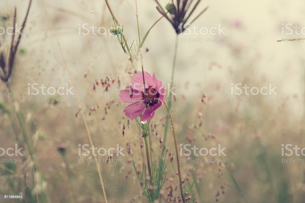 Flowers and vintage nature stock photo