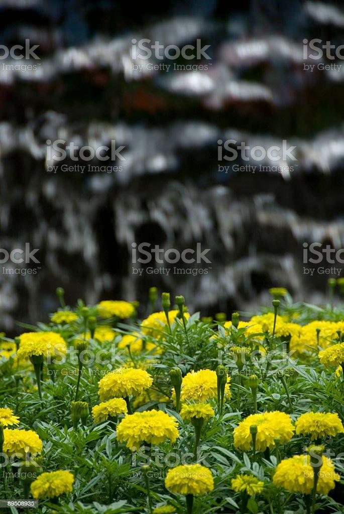 Fleurs et cascades 03 photo libre de droits