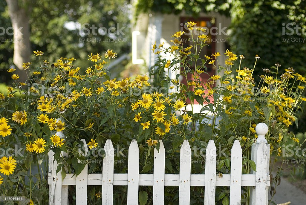 Flowers and White Picket Fence stock photo