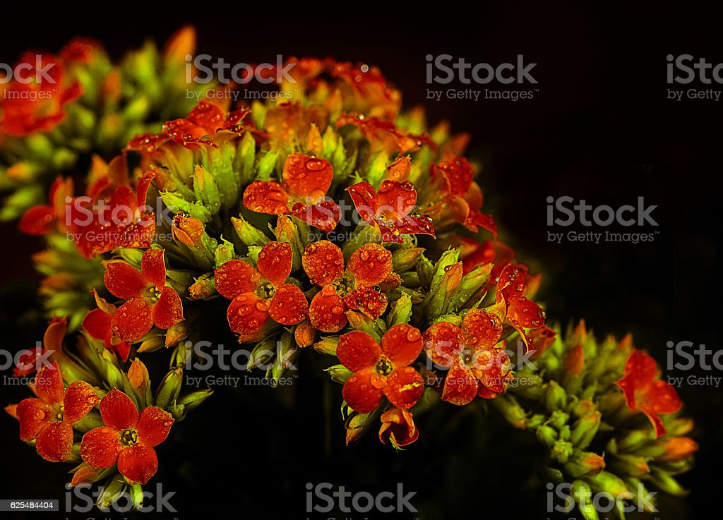 Flowers are gifted to the beloved . stock photo