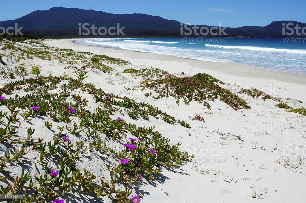 Flowers at a beach royalty-free stock photo