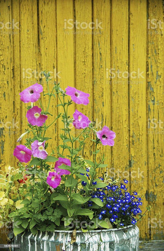Flowers at barrel royalty-free stock photo