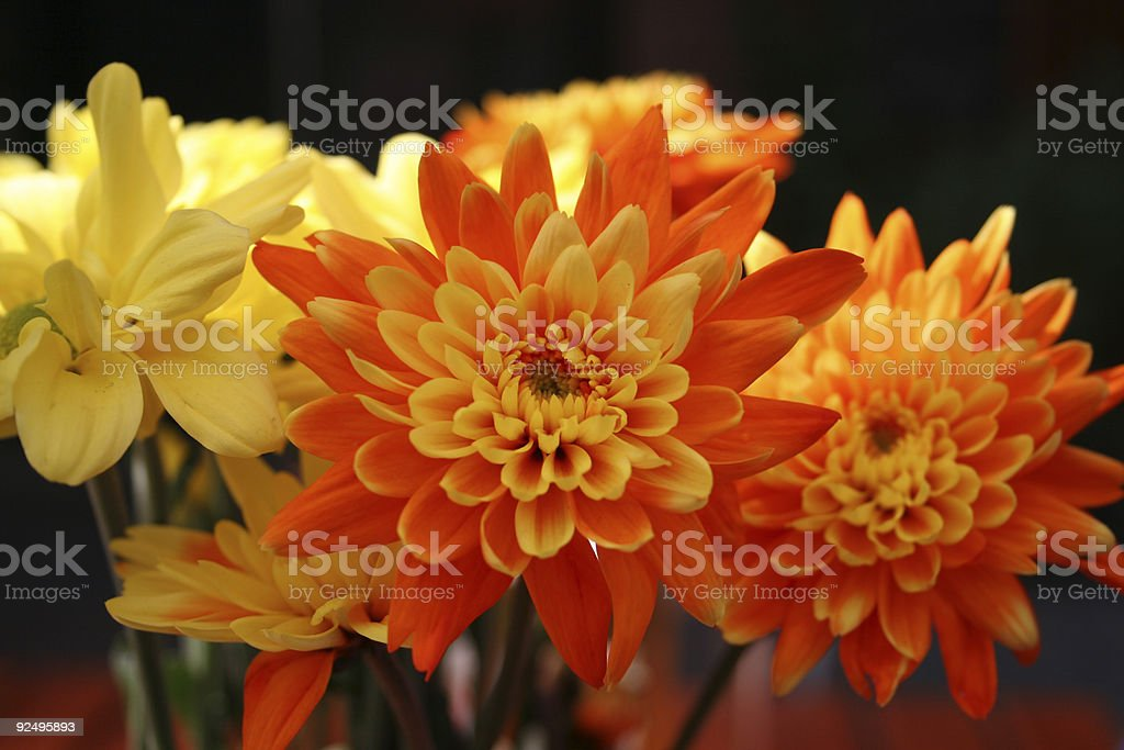Flowers at Close royalty-free stock photo