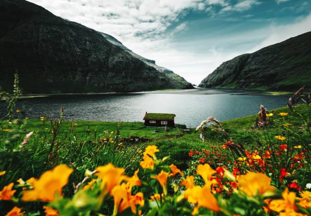 bloemen op de faeröer - faeröer stockfoto's en -beelden