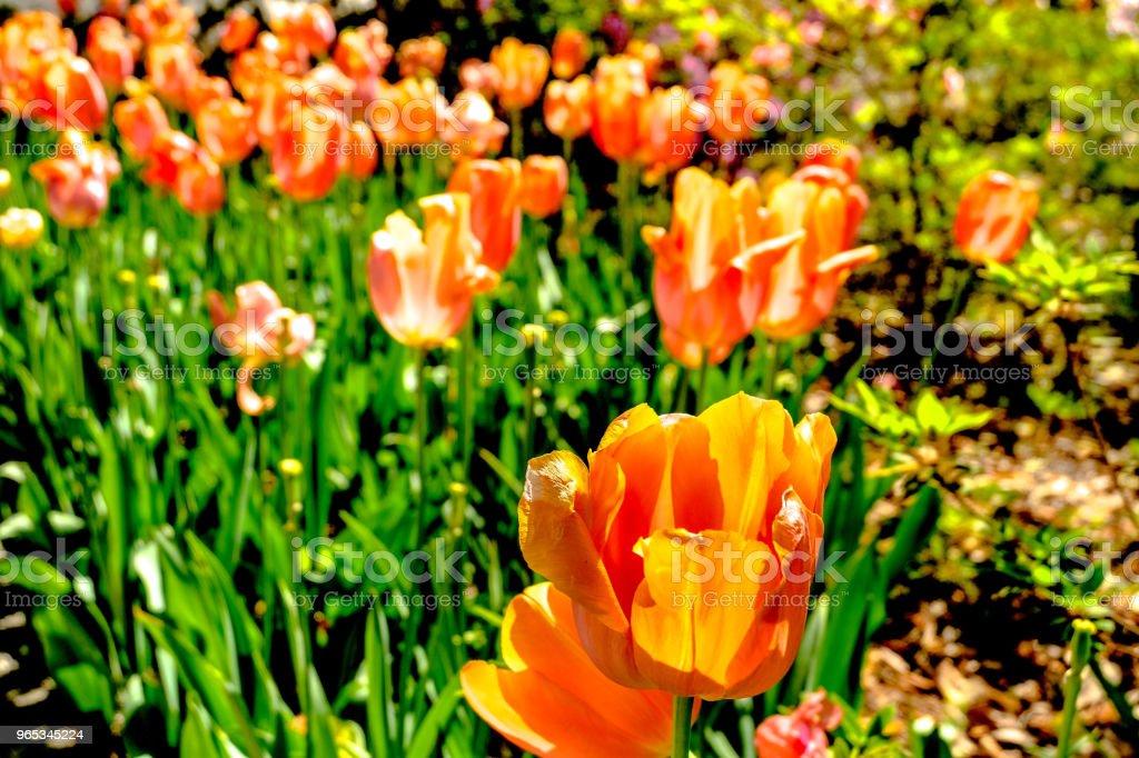 공식적인 정원 15에 꽃 - 로열티 프리 0명 스톡 사진