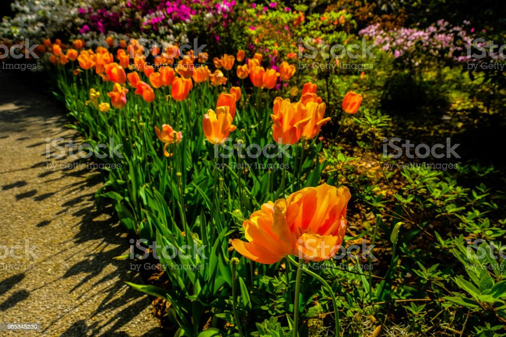 Flowers at formal gardens 16 royalty-free stock photo
