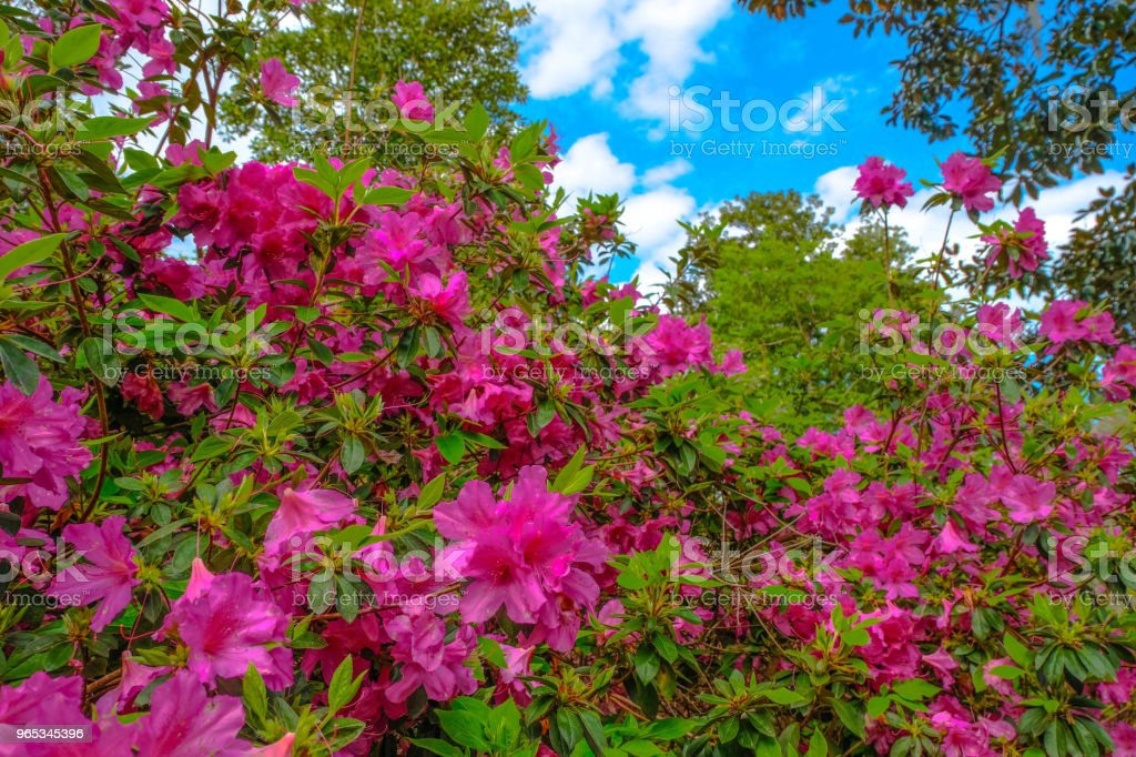 Flowers at formal gardens 21 royalty-free stock photo
