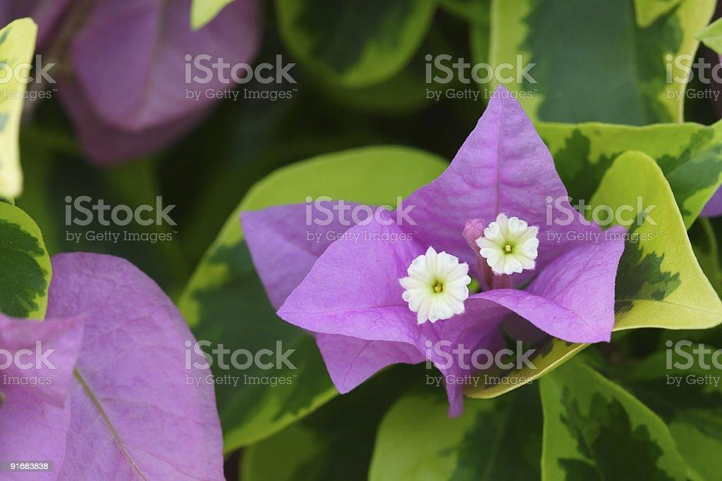flowers at garden stock photo