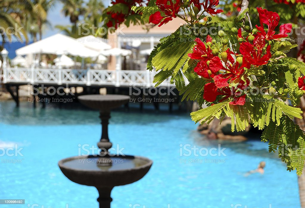 Flowers (in focus) at swimming pool, open-air restaurant royalty-free stock photo