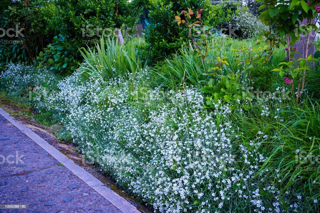 Blumen am Straßenrand – Foto