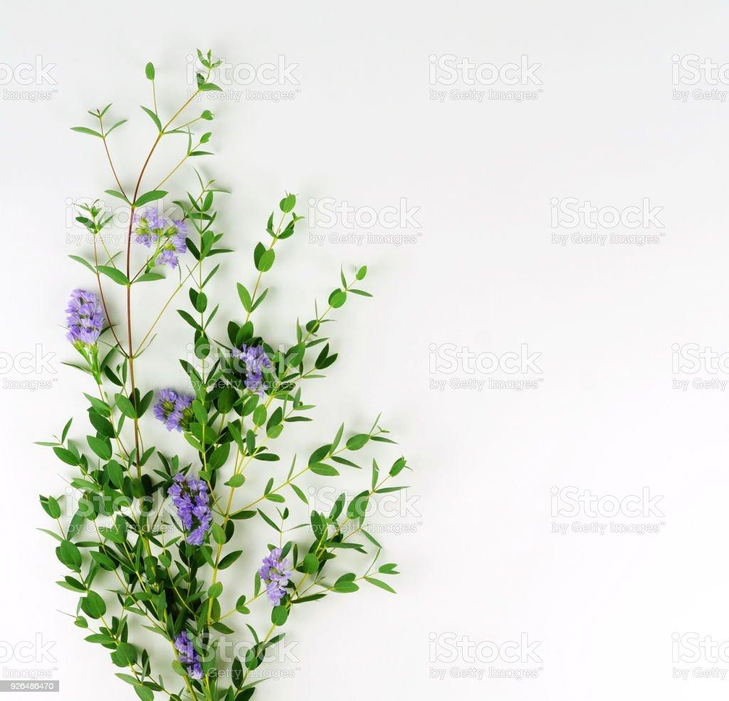 fleurs fond de branches deucalyptus et de fleurs violettes sur fond