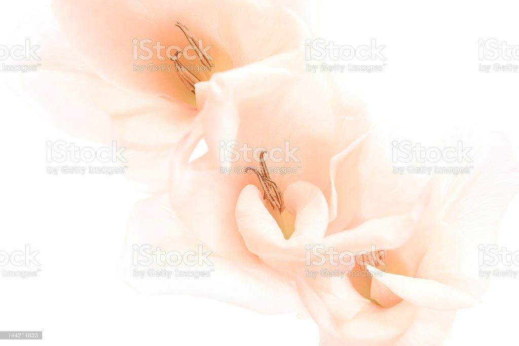 flowers background highkey royalty-free stock photo