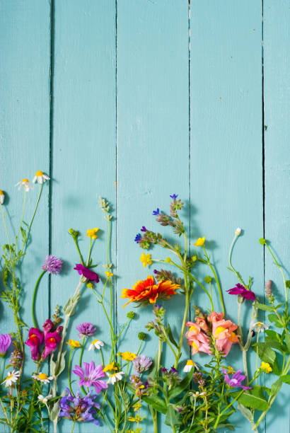 flowers background - june stock photos and pictures