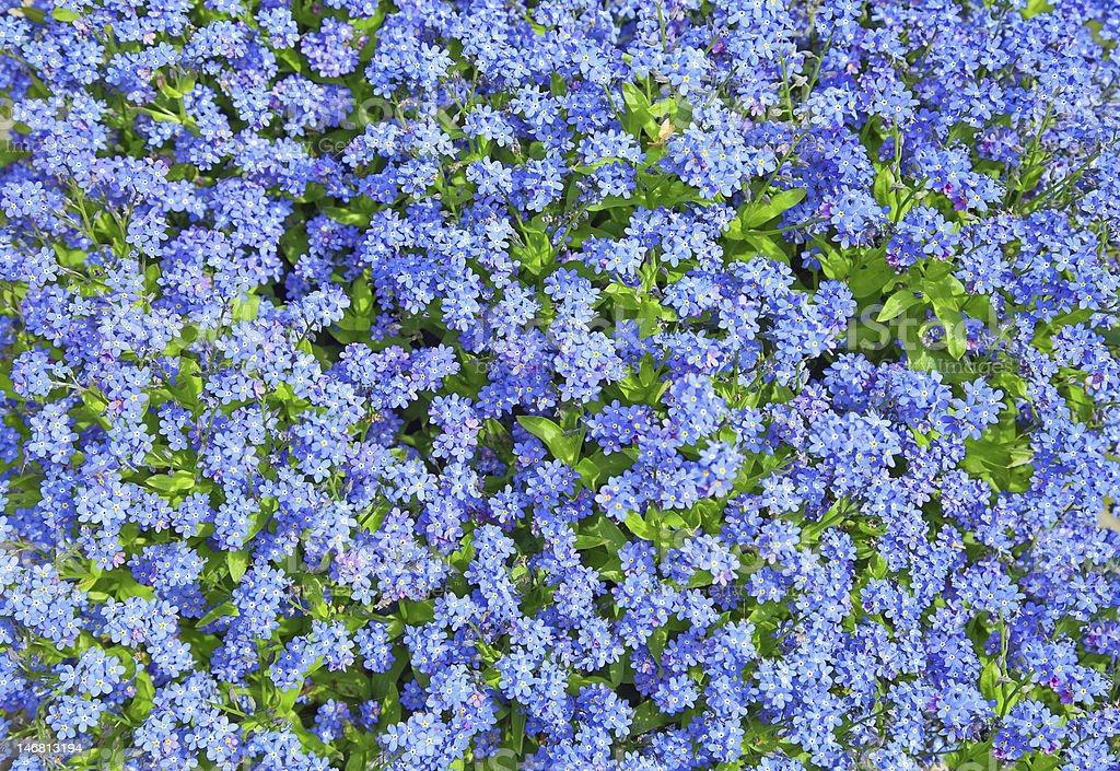 flowers background . stock photo