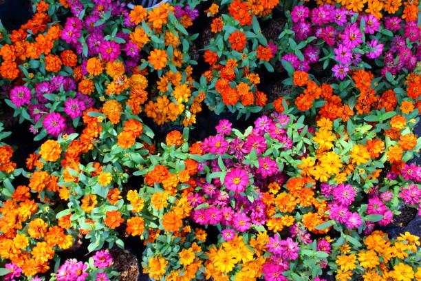 Flowers background picture id934850218?b=1&k=6&m=934850218&s=612x612&w=0&h=ml8tlgwf3xy1lplhlb7uz28vobkcj6rfutvtxr9epby=