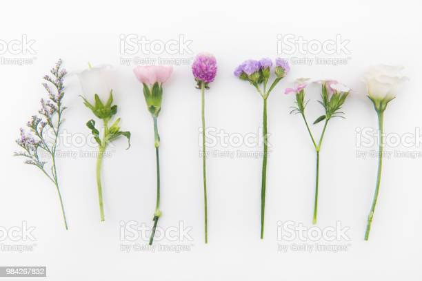 Flowers background picture id984267832?b=1&k=6&m=984267832&s=612x612&h=ngjzq2u8gj mt1byylrnbuw9frjji6ad5qx sd iqne=