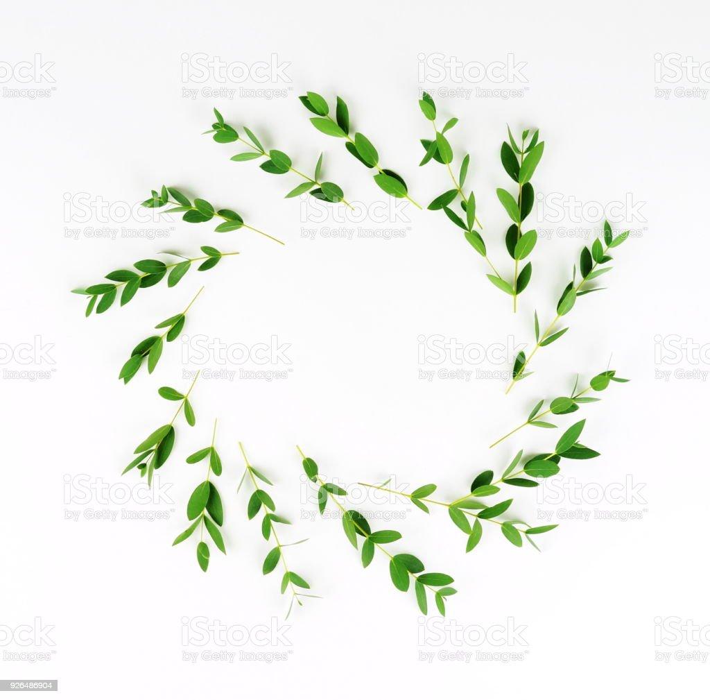 fond de fleurs couronne de branches deucalyptus sur un fond blanc