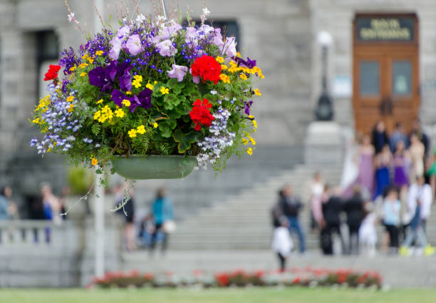 Flowers basket in front of tourists crowd gathered on steps of Parliament building in Victoria, British Columbia stock photo