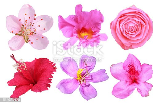 Set of isolated pink , red and purple flowers on white background.