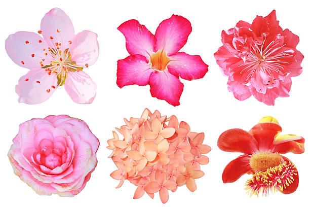 flowers big set isolated - pauwenkers stockfoto's en -beelden