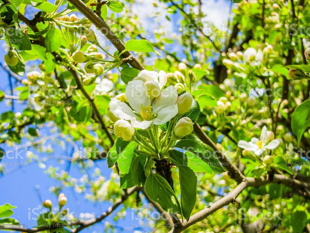 Птиц цветы весной Вишня и видом на сад стоковое фото