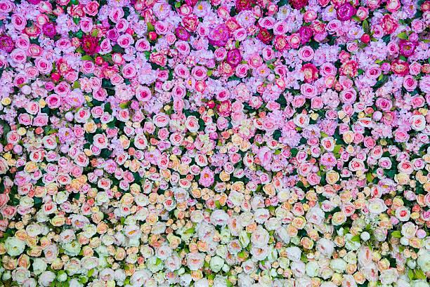 Flowers bloom picture id459315707?b=1&k=6&m=459315707&s=612x612&w=0&h=f582xzul zg9g9umxu7hwb7f1ei hfylkyv4cdhawxy=