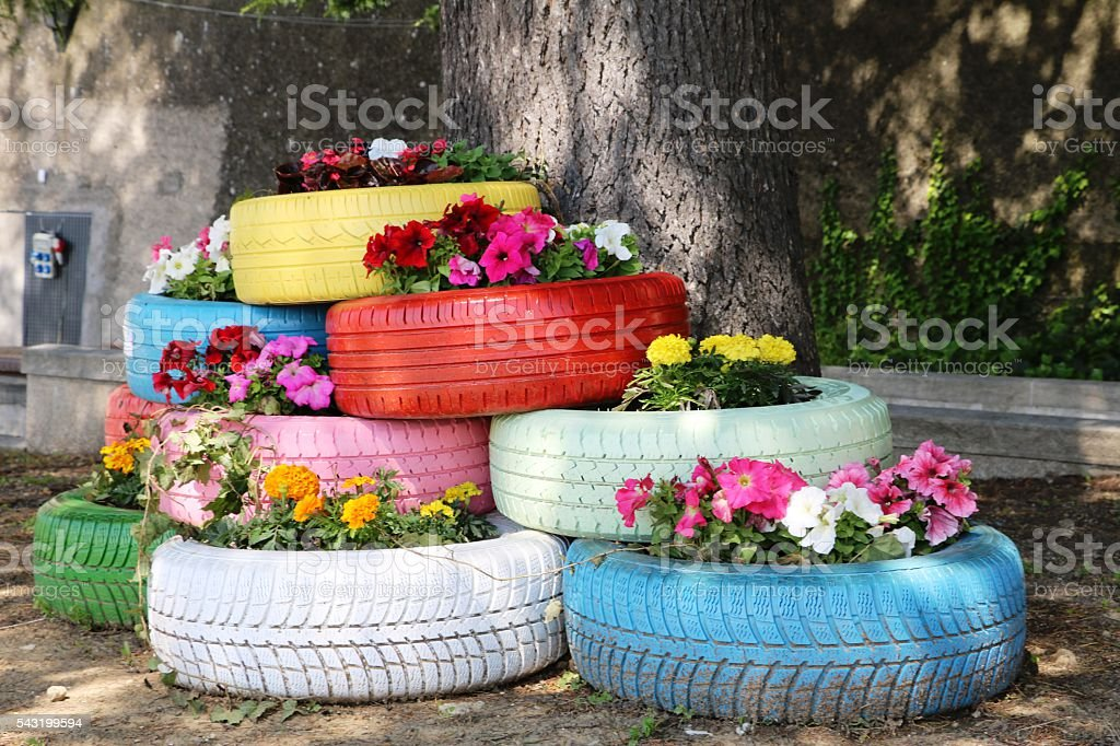 Flowers blooming in old car tires stock photo