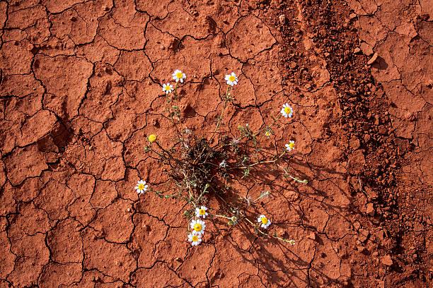 flowers blooming in dem land - seltene pflanzen stock-fotos und bilder