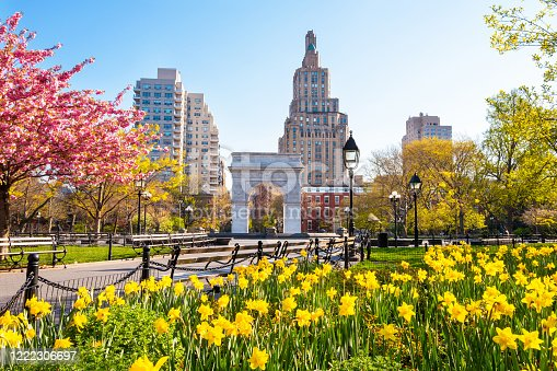 Springtime in an empty Washington Square Park, New York. Flowers blooming.
