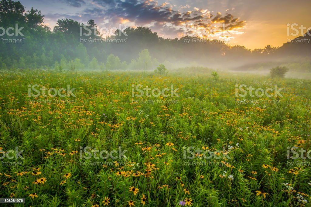 Flowers Blooming on Misty Morning in Hocking County Ohio stock photo