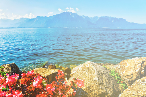 Flowers blooming on promenade of Geneva Lake Montreux summer
