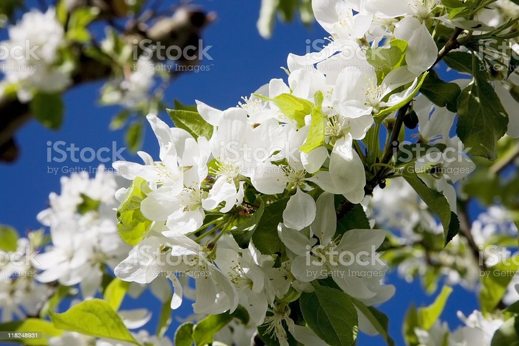 Flowers Blooming on summer Day stock photo