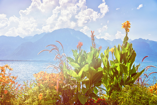 Flowers blossoming at embankment of Geneva Lake in Montreux summer