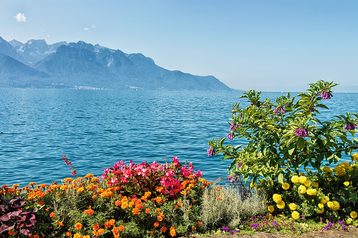 Flowers blossoming in embankment of Geneva Lake in Montreux