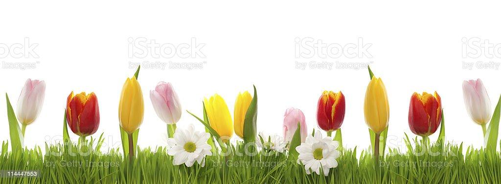 flowers border royalty-free stock photo