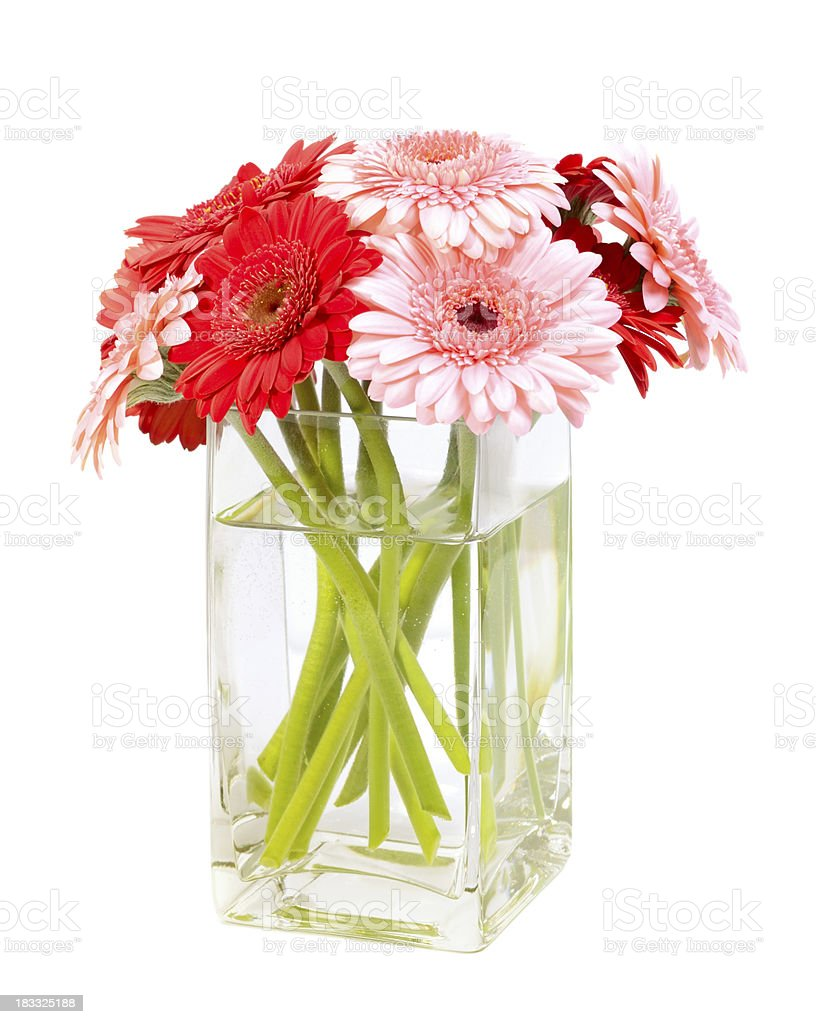 Flowers Bouquet Of Pink And Red Gerbera Daisies In Vase Stock Photo ...