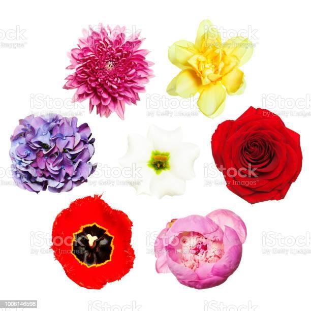 Flowers bright colorful set of flowers top view picture id1006146598?b=1&k=6&m=1006146598&s=612x612&h=fl6jxzikzfgsr9lvaqhhlobdi d cdl6gnjiydjb6mw=