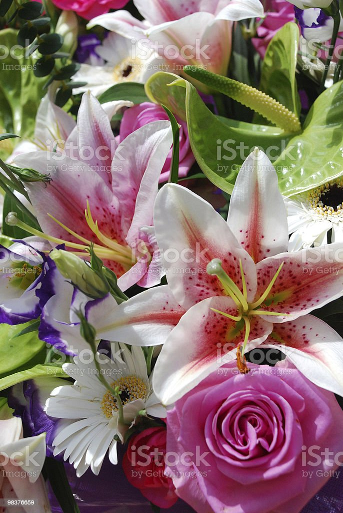 Flowers bursting with colour royalty-free stock photo