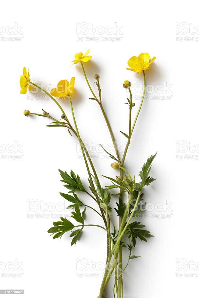 Flowers: Buttercup stock photo