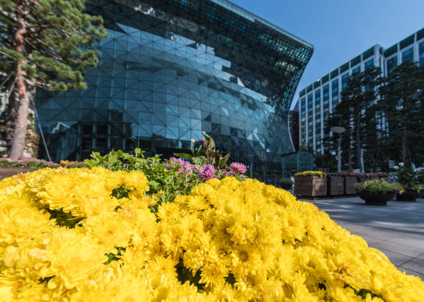 Flowers by City Hall in Seoul, South Korea stock photo