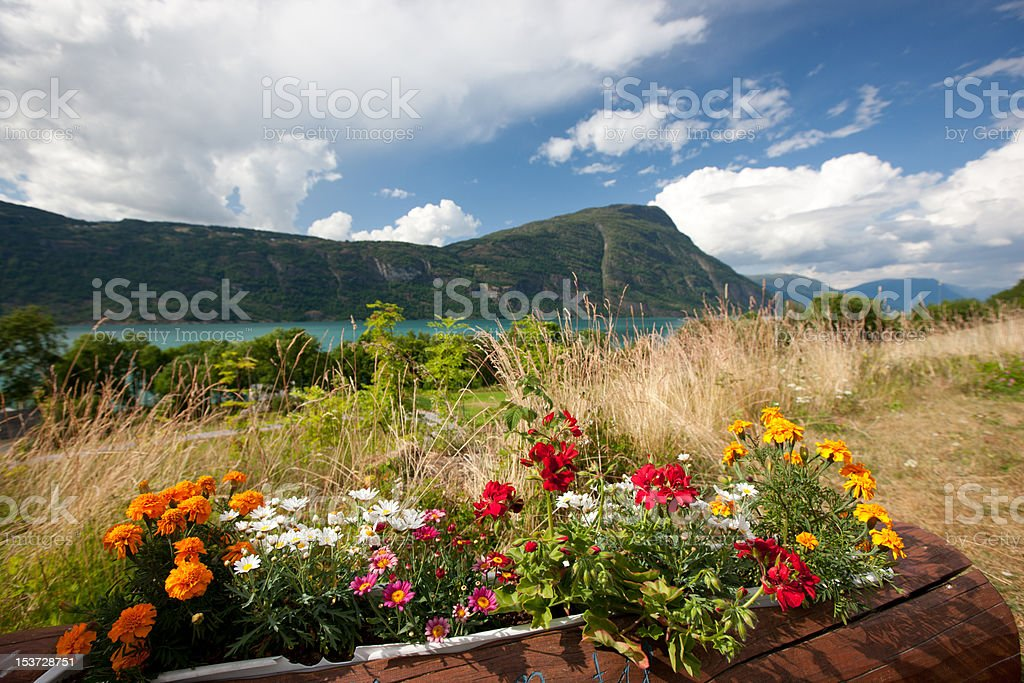 Flowers by lake stock photo