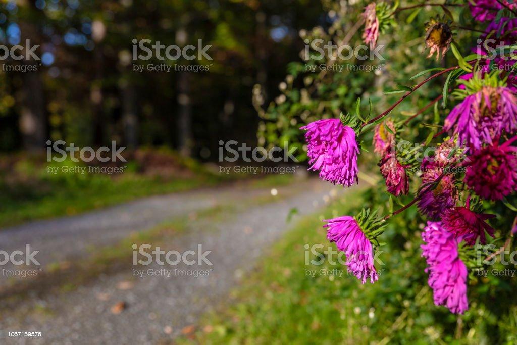 Blommor på väg bildbanksfoto