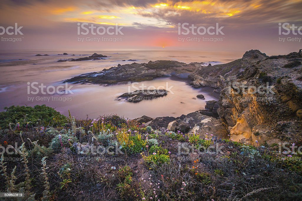 Flowers by the Sea royalty-free stock photo
