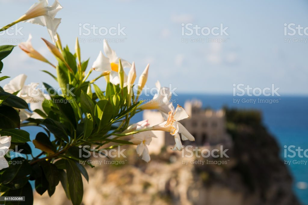 Flowers by the sea, view of santa maria dellísola stock photo